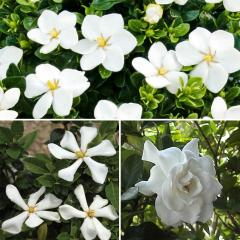 44% off Shrub Collection Plant, Multi-Colour