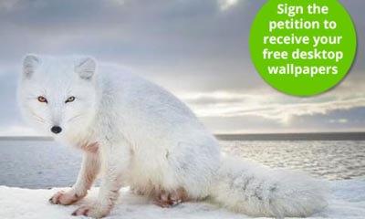 Click here<br />Free  Arctic Wallpaper