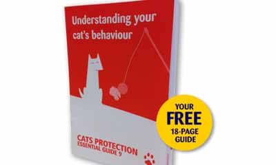 Free Cat Protection Guide