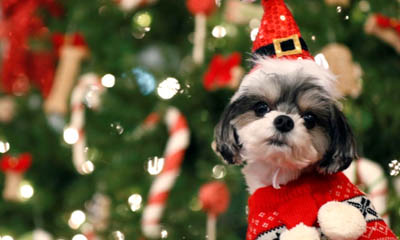 Free Christmas Pet Survival Guide