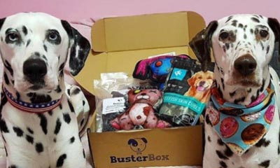 Free Buster Box Dog Treats
