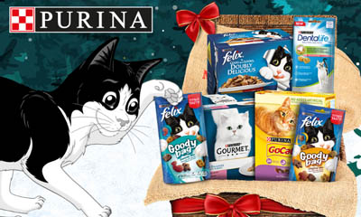 Win a Cat Christmas Hamper
