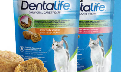 Free Dentalife Oral Cat Treats