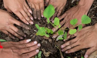Free Trees for Schools & Communities