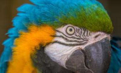 Win family passes to Amazona zoo!