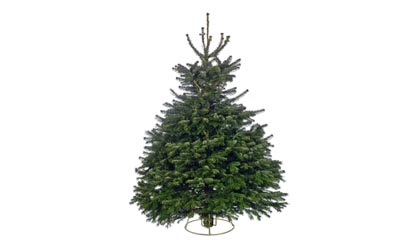 £65.98 for a Real Christmas Tree