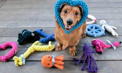 Free Pet Toys